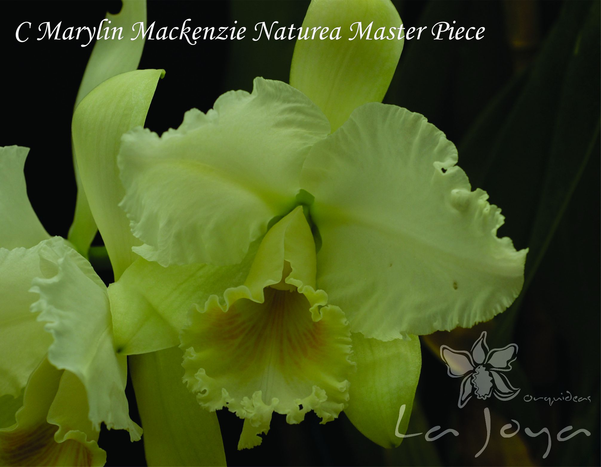 Marylin Mackenzie Naturea Master Piece