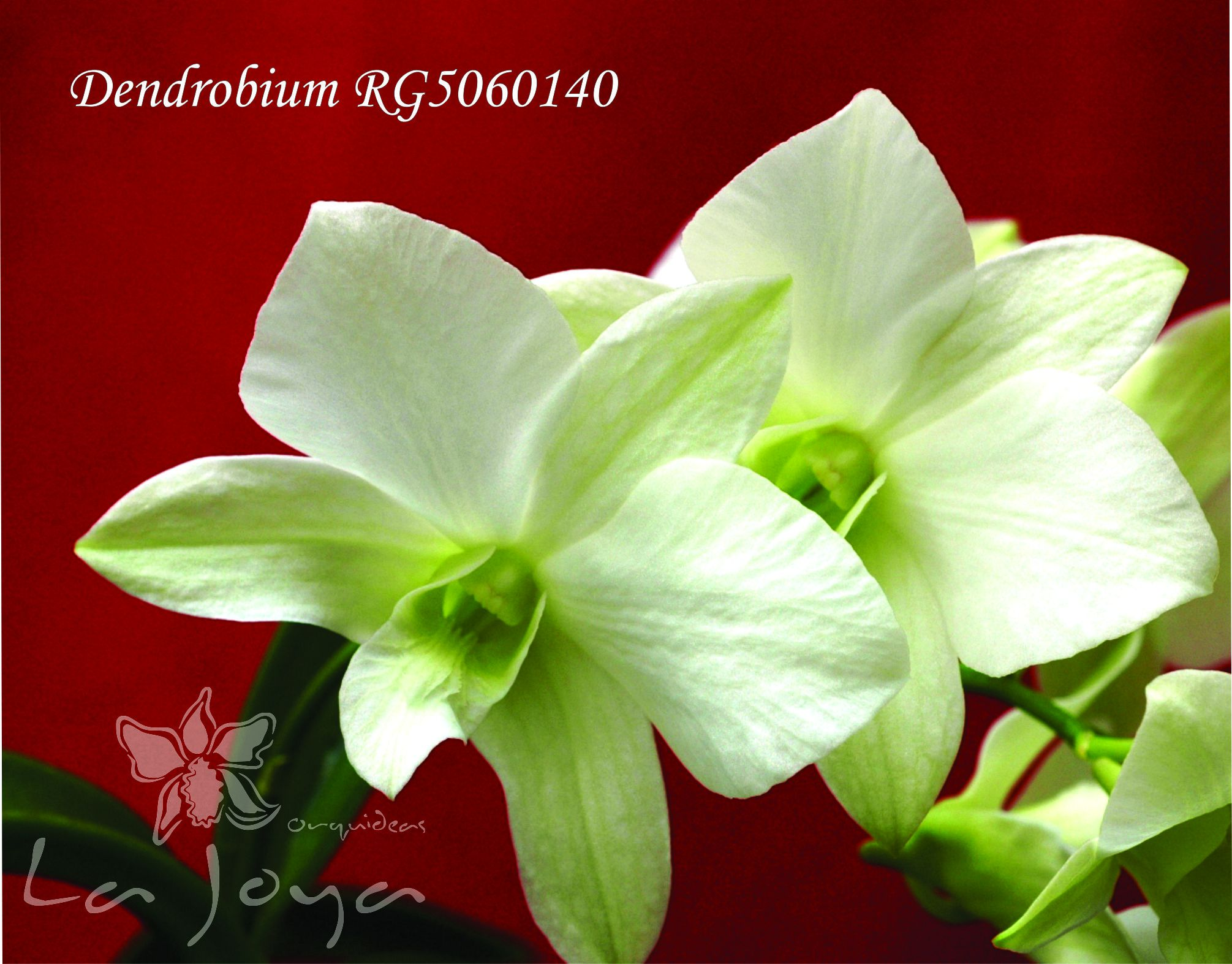 RG5060140